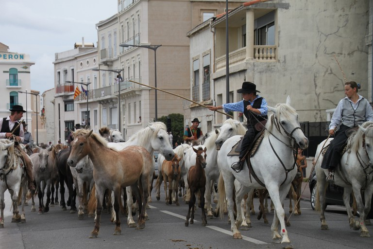 The transhumance passing along the Corniches in Marseille in 2013 | © Jeanne Menjoulet/Flickr