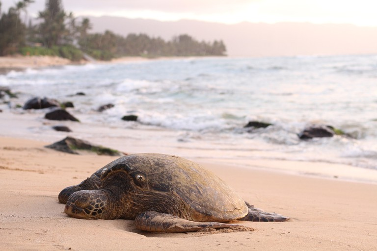 Sea turtles   © Pexels/Pixabay
