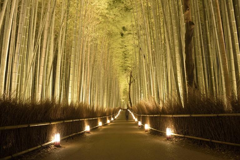 Arashiyama Bamboo Forrest