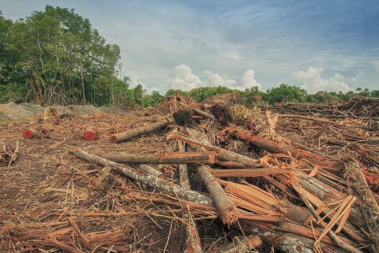Borneo Deforestation | © Rich Carey/Shutterstock