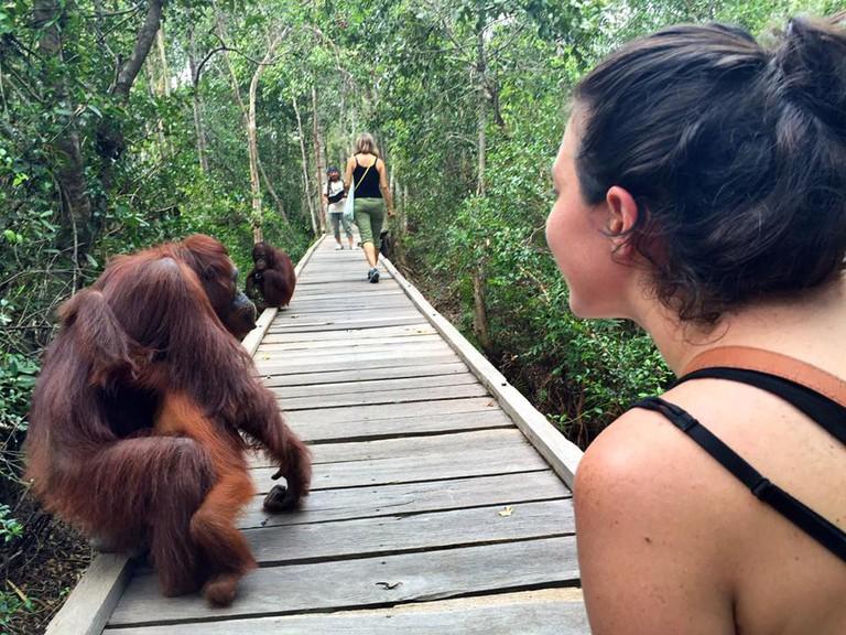 Camp Leakey Orangutans| © Nikki Vargas
