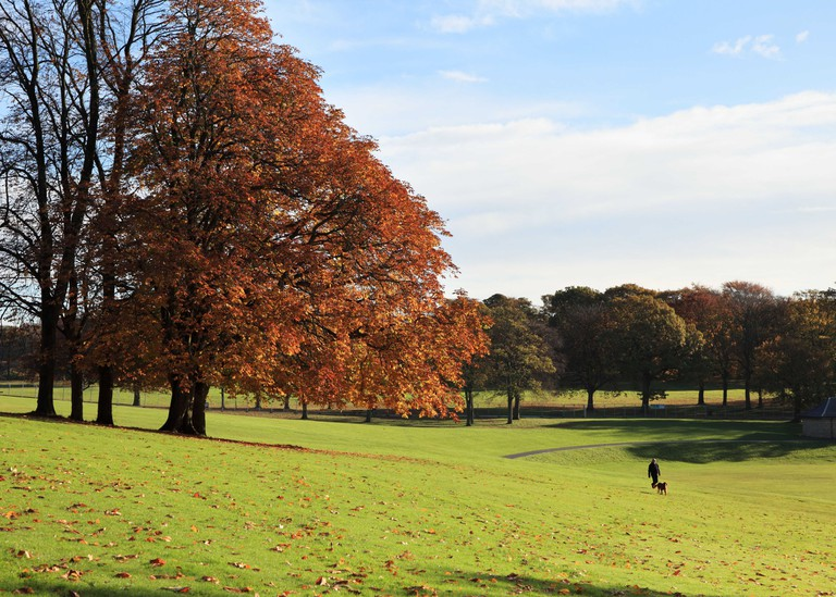 Man walking dog past trees showing autumn colours in Roundhay Park, Leeds