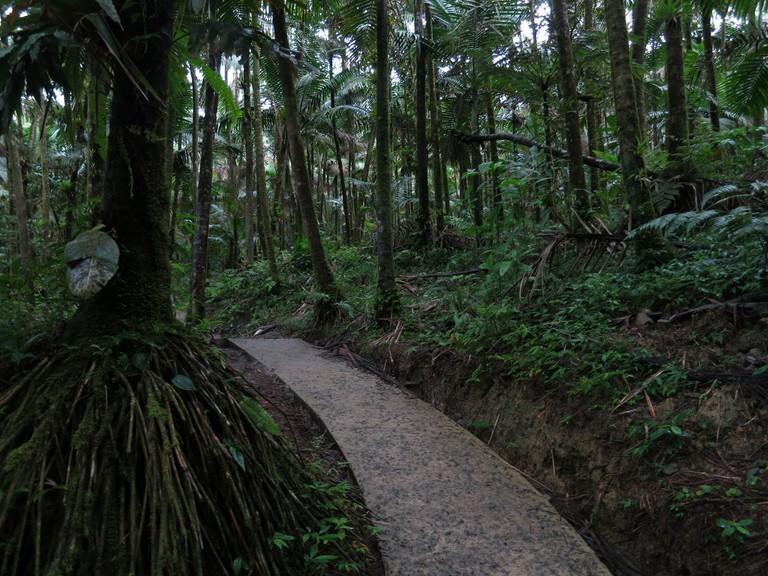 El Yunque rainforest trail
