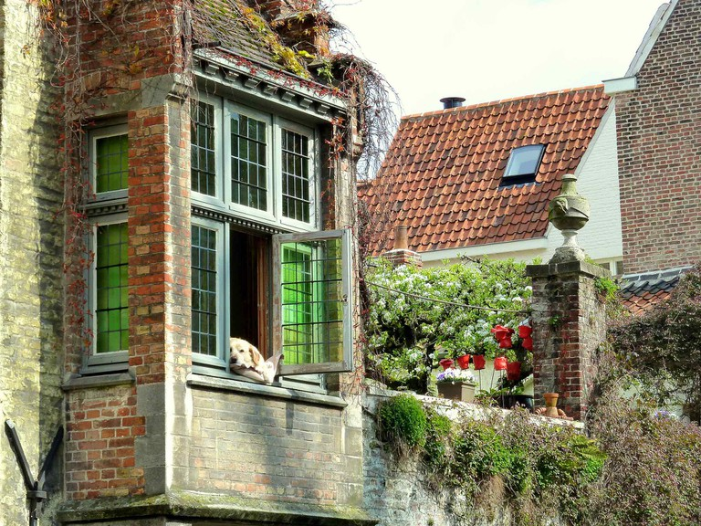 Golden lab Fidèle became a Bruges legend by always lounging at his window spot above the Groenerei canal