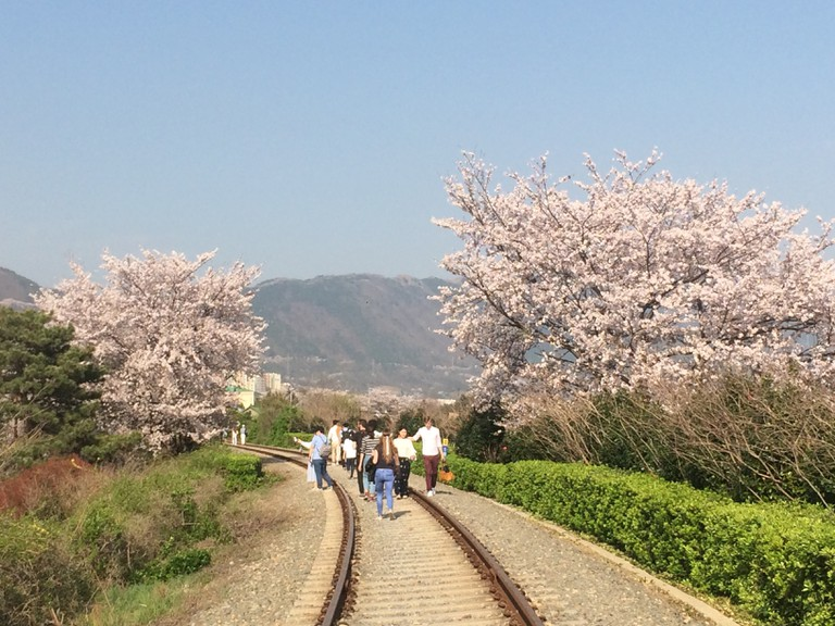 Train Tracks Jinhae | Courtesy of Abby Narishkin