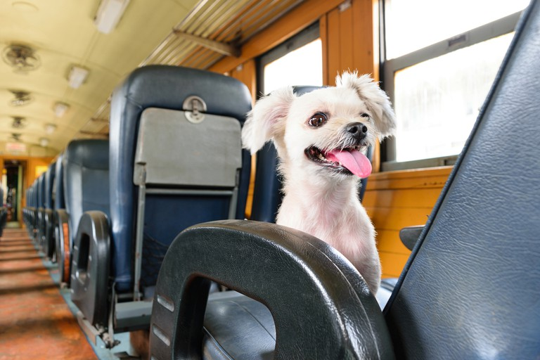 In Belgium, small dogs ride the railway for free while big hounds pay €2.50 extra