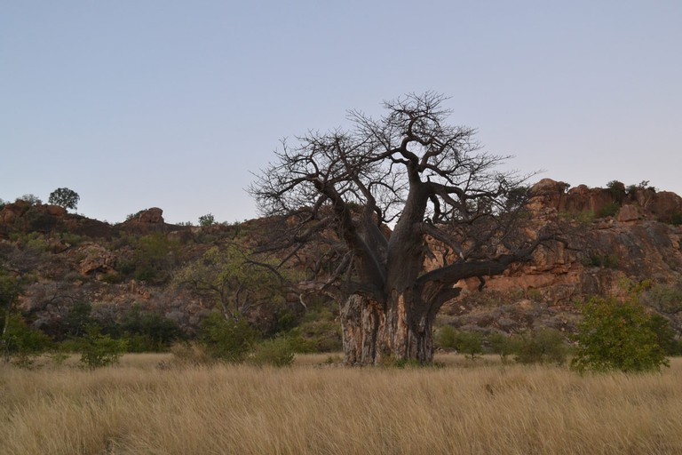 The park has a range of vegetation types associated with the outcrop of cave sandstone, baobab trees, Karoo fossils and ancient rocks nearly three billion years old