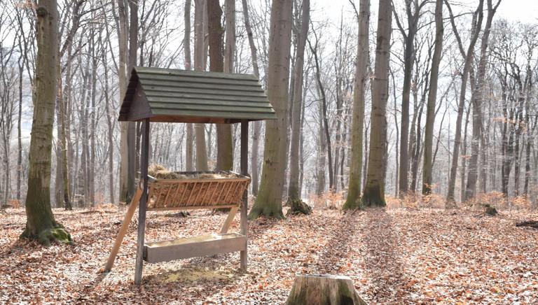 Las Wolski, a large park on the outskirts of Krakow