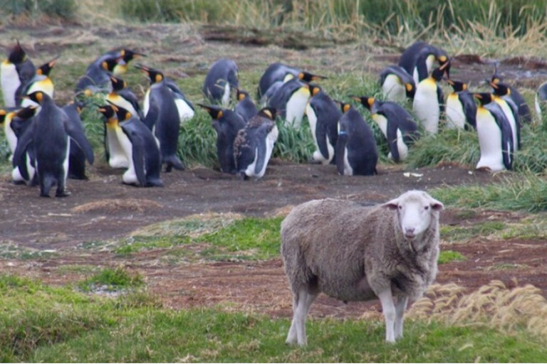 Penguins in Ushuaia during a TieRRa Turismo excursion | Courtesy of TieRRa Turismo