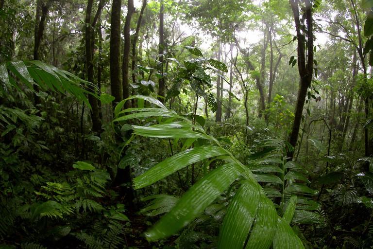 Deep in the dense rainforest