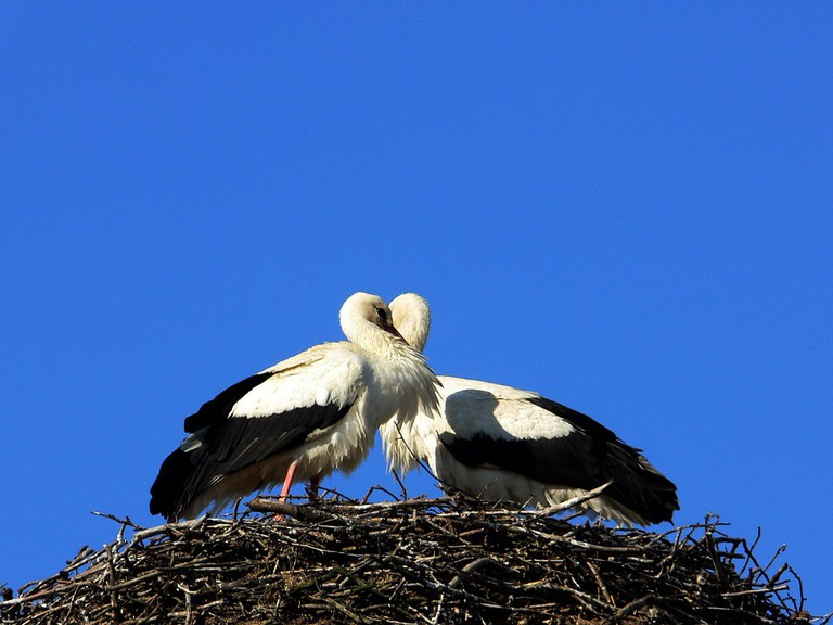 Storks are a good omen