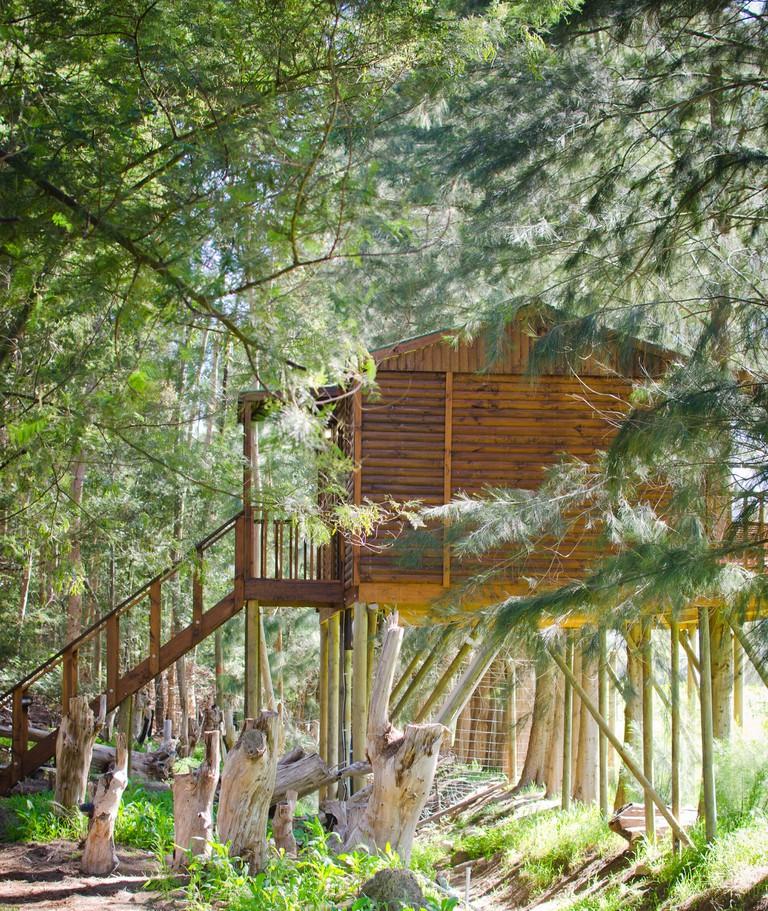 Vindoux Luxury Tree House