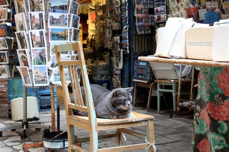 The bookstore Acqua Alta is still home to several community cats