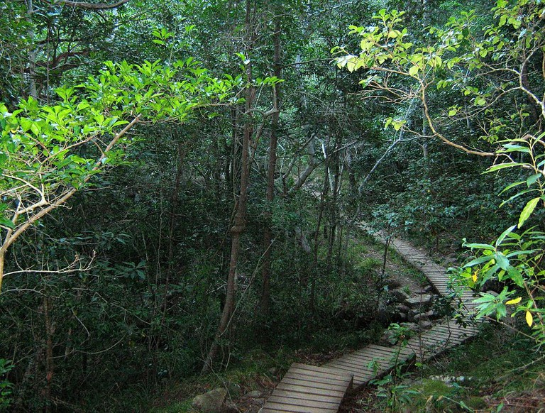 Woodcutter's Path through Newlands Forest