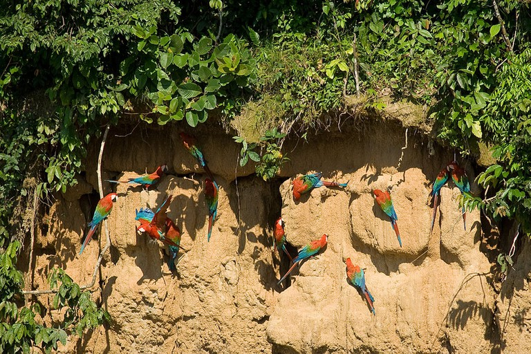 The macaw clay licks |©Ricardo Sánchez/WikiCommons