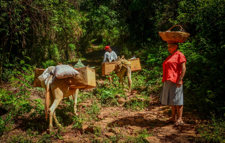 Working in the Paraguayan countryside