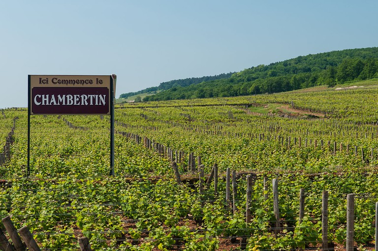 The wine route stars in Dijon
