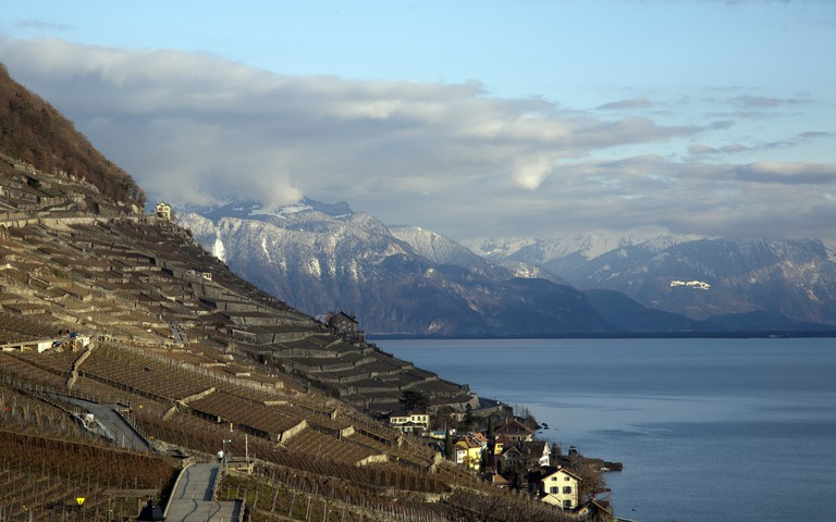 The Lavaux vineyards