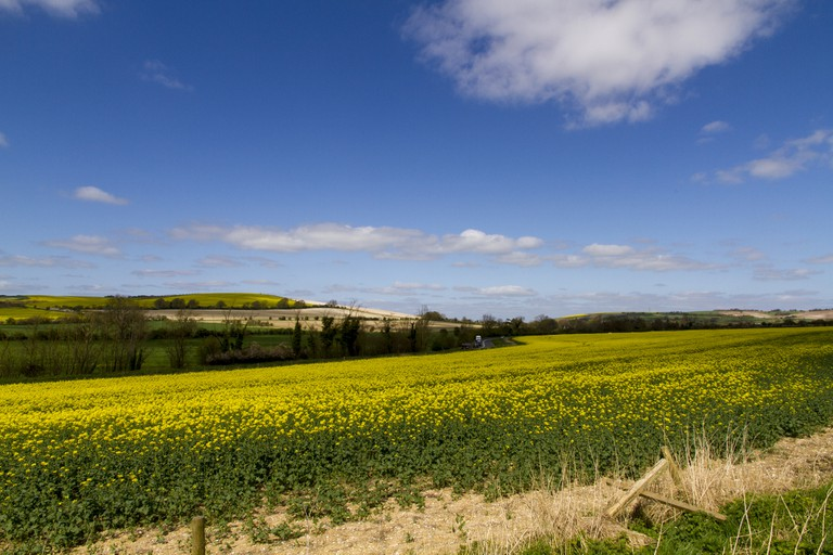 Yellow Fields Of Wiltshire