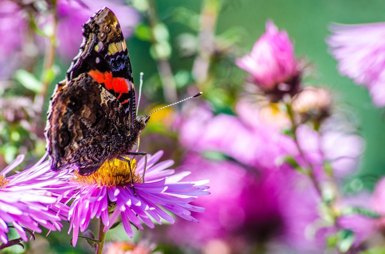 The Beauty of Butterfly World