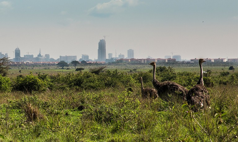 Nairobi National Park |© Ninara/ Flickr