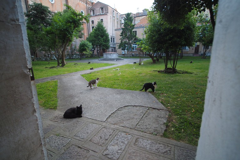A courtyard of cats