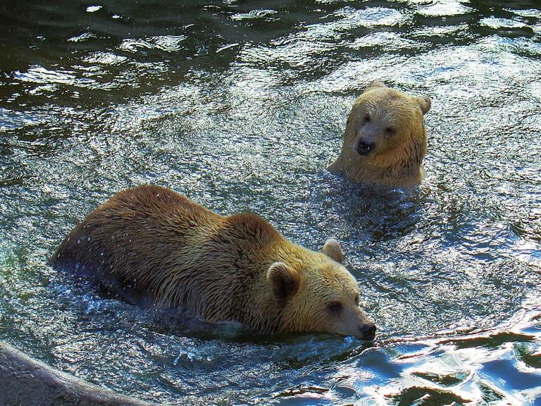 The Eurasian brown bears at the Helsinki Zoo/ ZeroOne/ Flickr