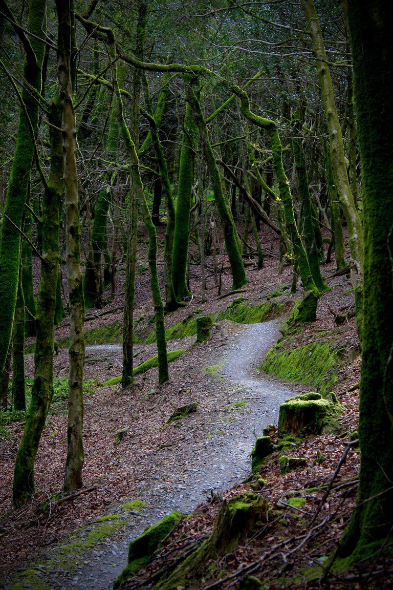 Cardinham Woods | © The Dame/Flickr