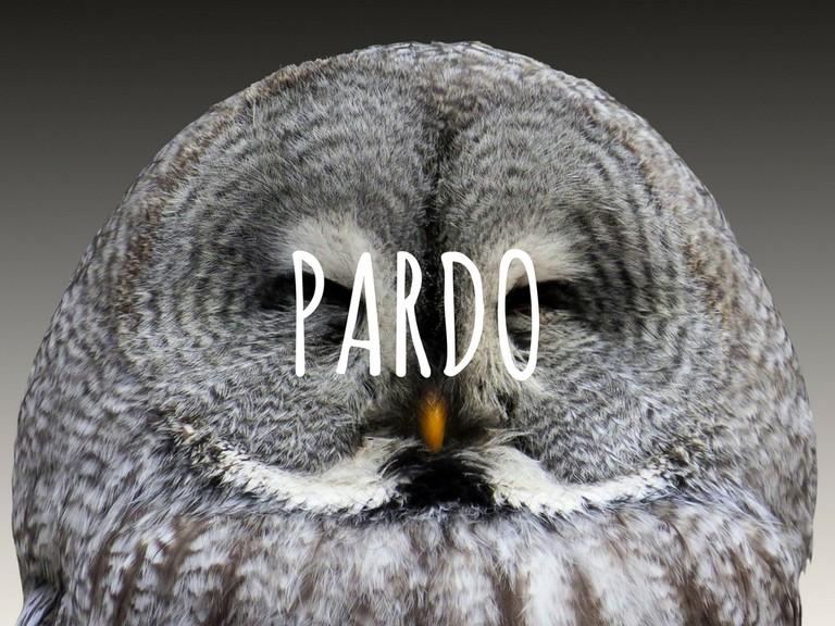 50 shades of pardo I