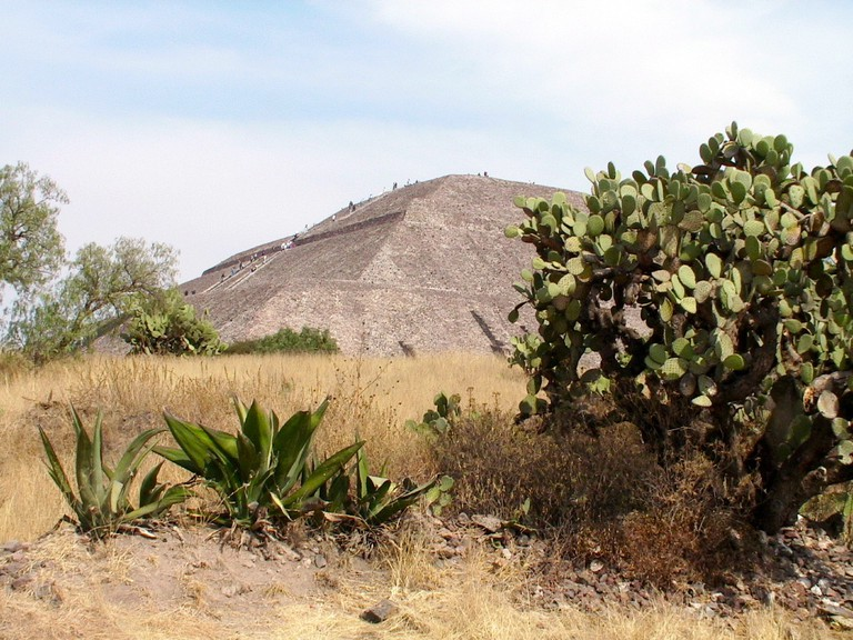 Cactuses and the Pyramid of the Sun at Teotihuacán