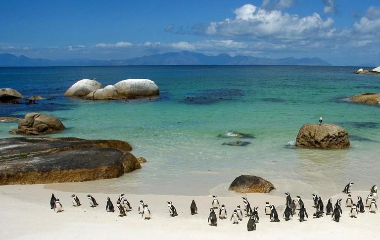 Boulder's Beach penguin colony