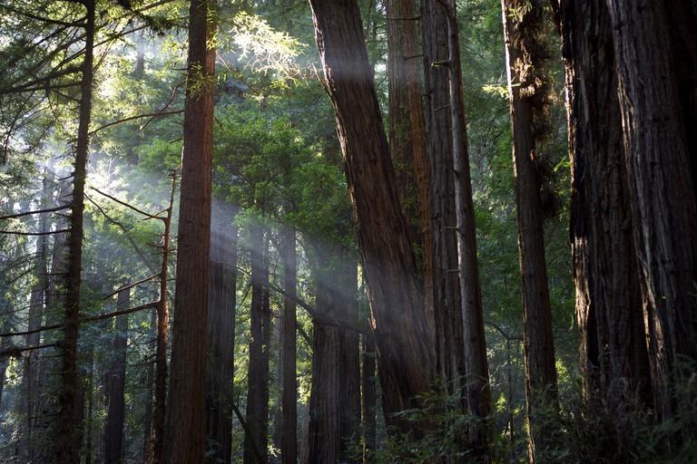 Muir Woods | © Flickr user Julian Fong