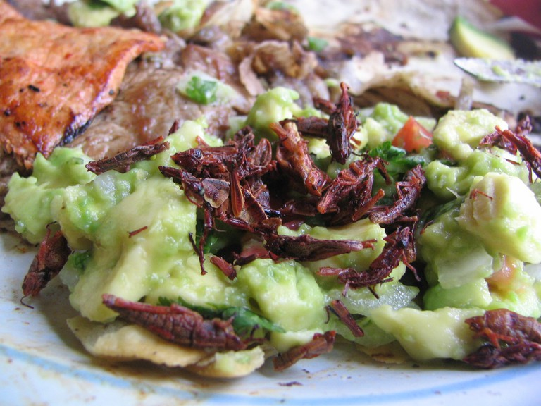 Chapulines with guacamole