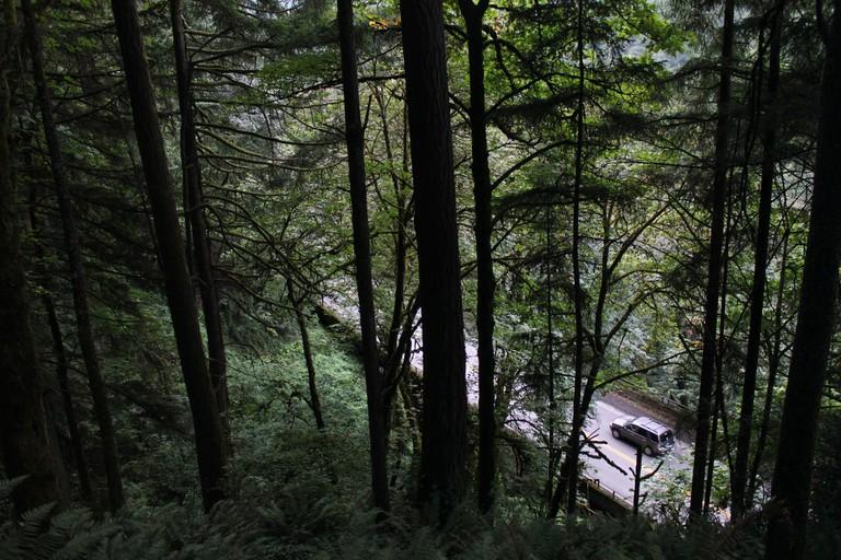 Portland: Forest Park | © Eli Duke/Flickr
