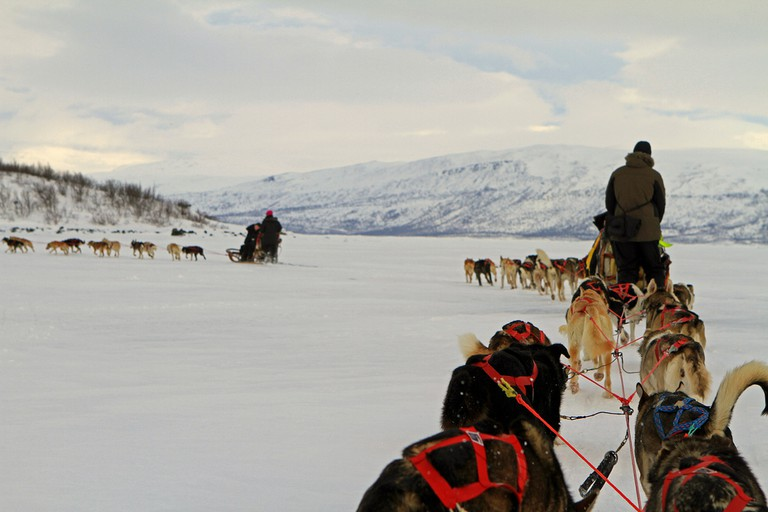 Dog sledding is just one activity at Abisko National Park