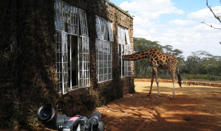 Giraffe | © Jake / Flickr