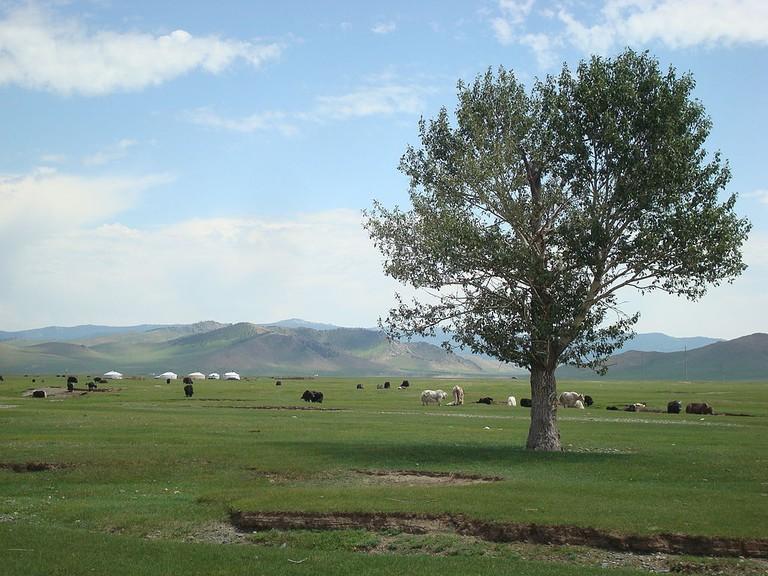 Mongolian landscape
