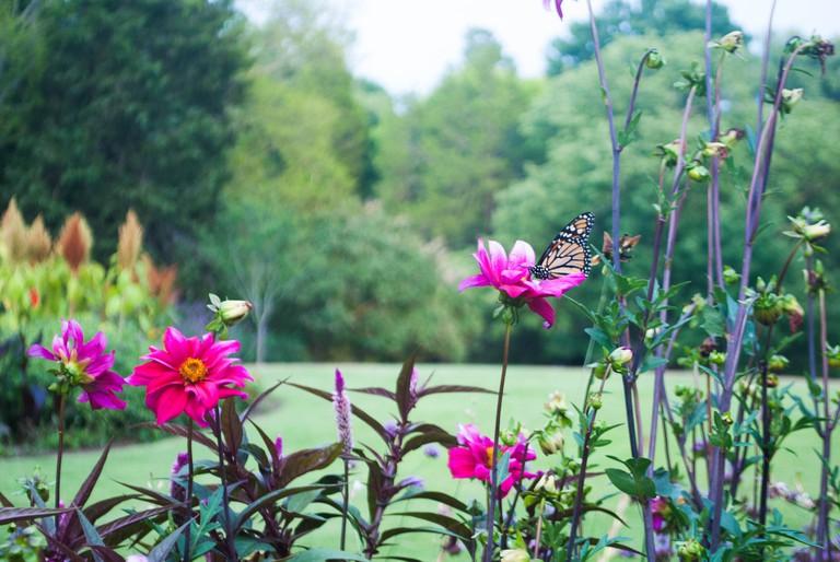 Cheekwood Botanical Gardens