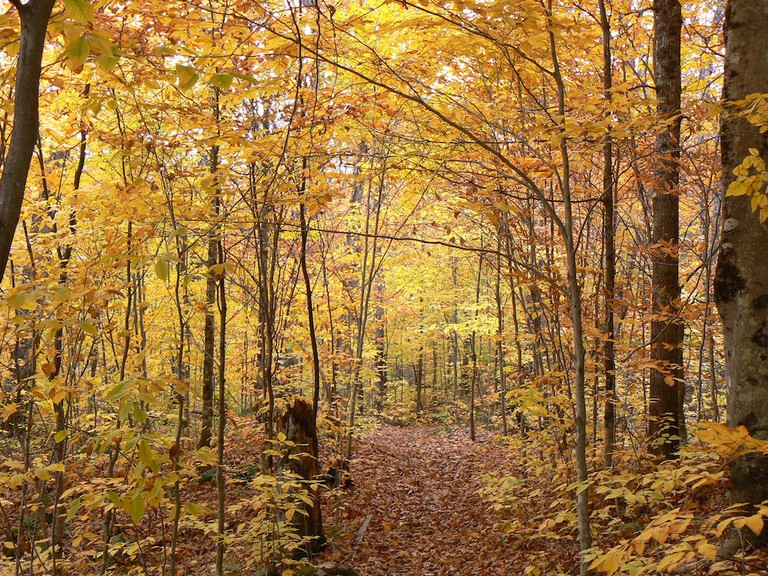 Along the trail to Lac Gabet in la Mauricie National Park