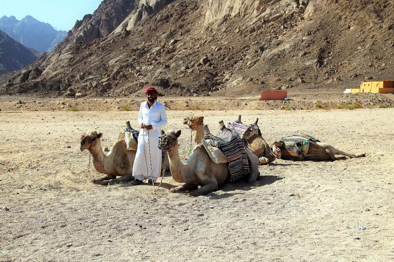 Experience the Bedouin lifestyle deep in the Jordanian desert