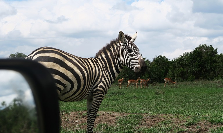Zebra| © Jean Wandimi/Authors Own