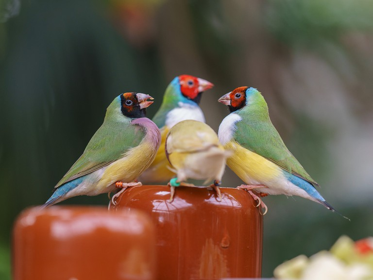 Birds in Costa Rica | © Arend / Flickr