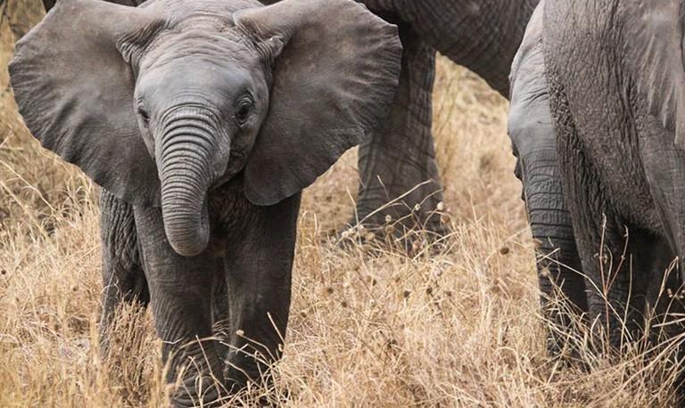 Elephant | ©Pixabay / Pexels