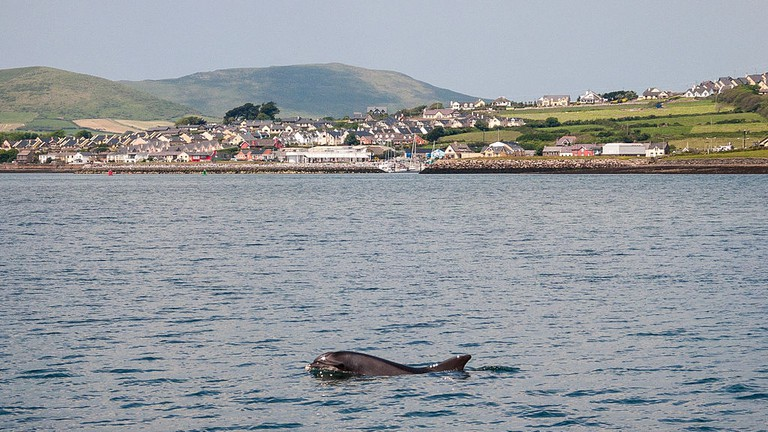 Dingle Bay with Fungie | © JoachimKohlerBremen/Flickr