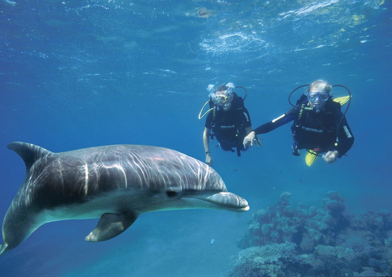 Diving with a dolphin at Dolphin Reef, Eilat