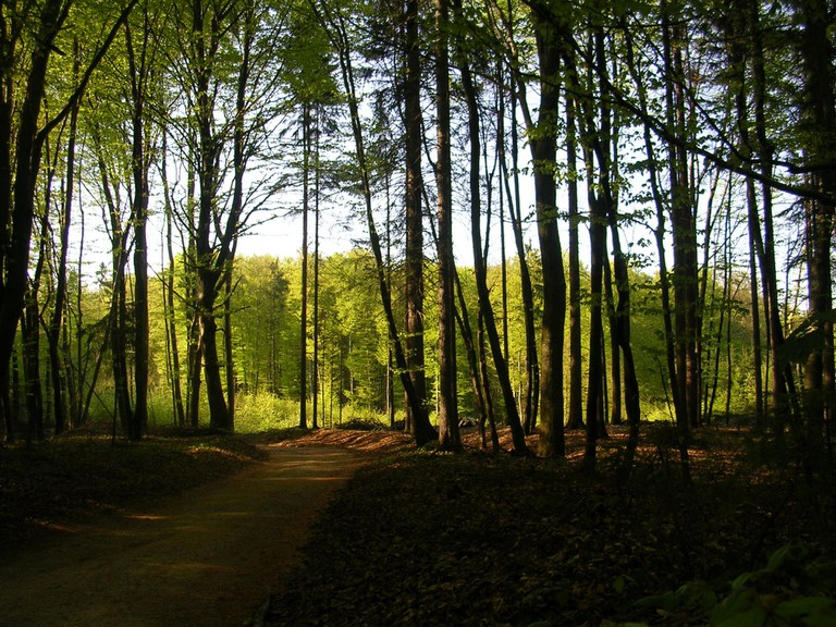 Forest in Slovenia │