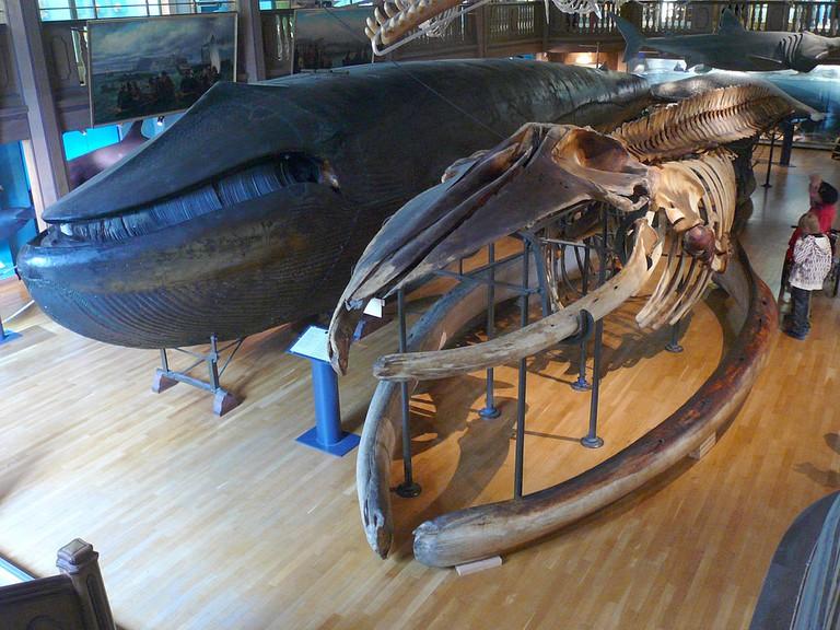 Best Gothenburg museums