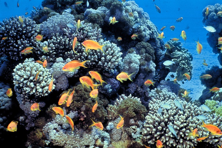 The coral reef in the Gulf of Eilat, Red Sea