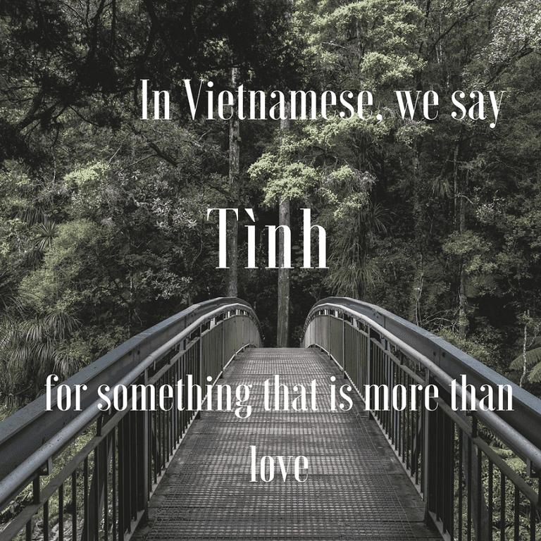 Thương-More than love