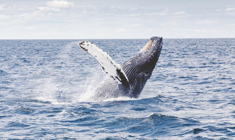 Whale | © Thomas kelley/ Unsplash